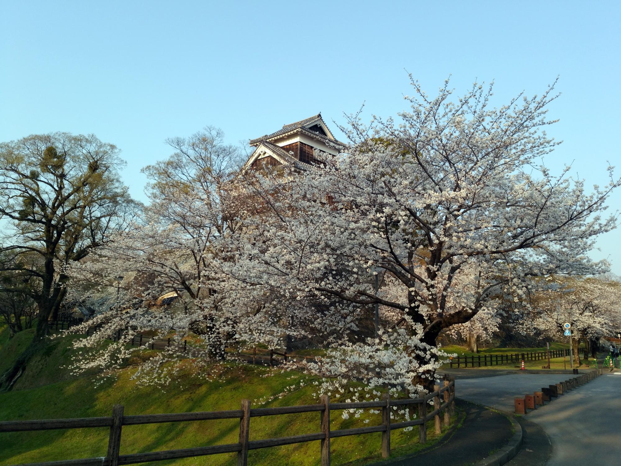 【熊本】熊本城の桜を見に行ってきた【2018年春】