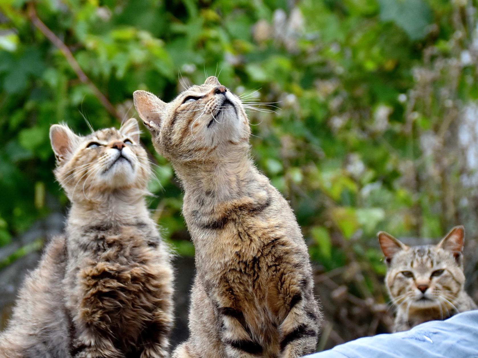 """【坂上どうぶつ王国】""""猫島""""こと熊本の湯島がインスタで話題!幸せ運ぶ白猫モロ"""