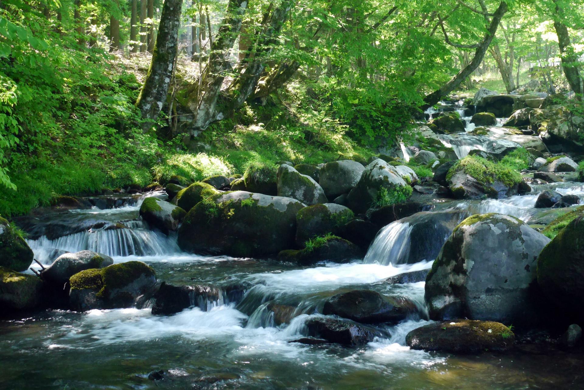 熊本県山鹿市の矢谷渓谷が『夏休みに行きたいスポット』として話題!キャンプ場や天然のウォータースライダーもあります【ヒルナンデス】