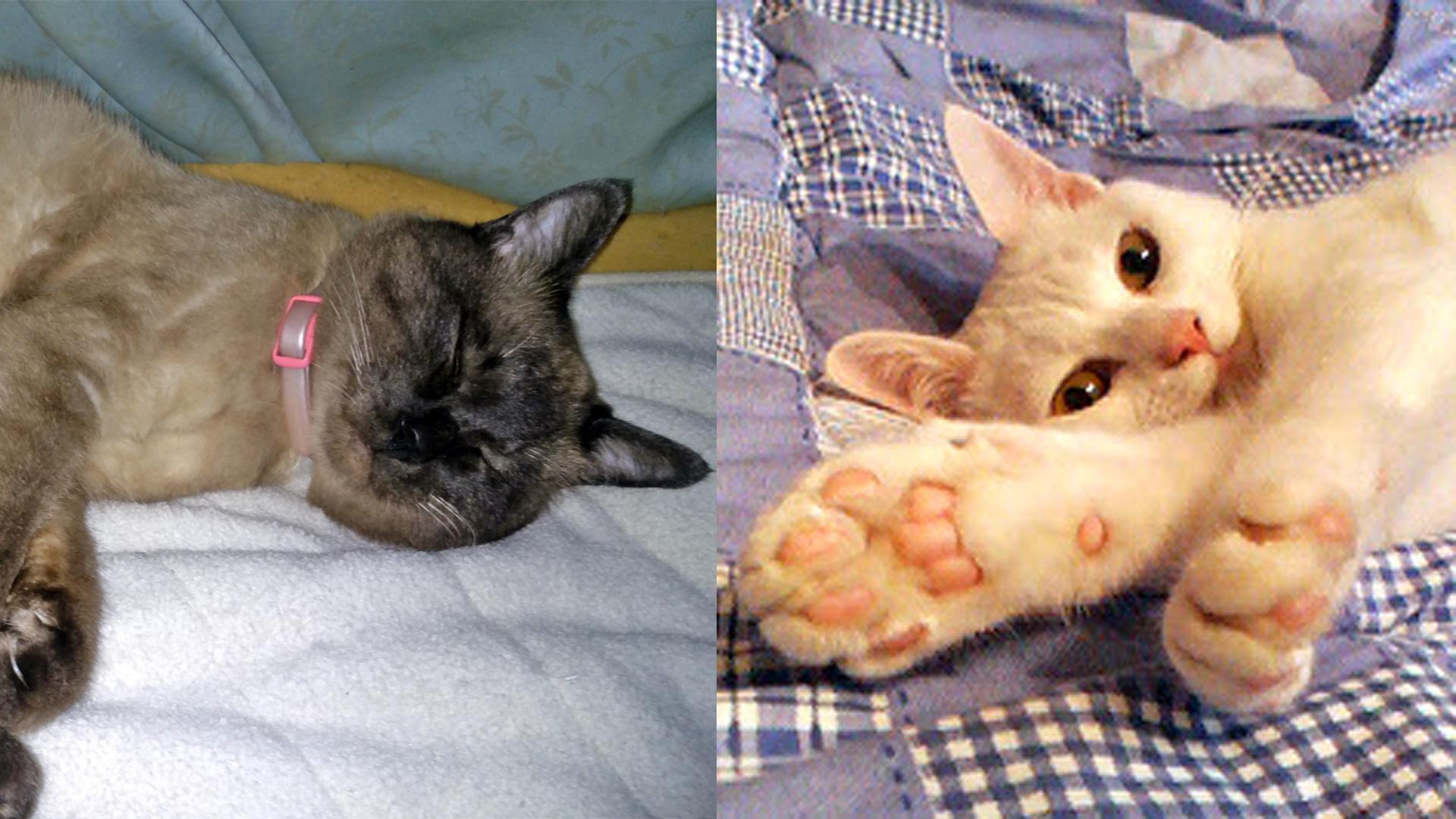 【映画『旅猫リポート』レビュー】福士蒼汰主演!動物を通して家族愛を再確認できる作品
