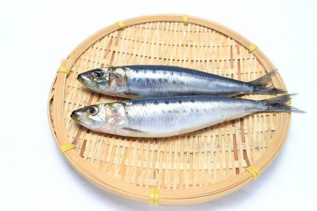 【たけしの家庭の医学】イワシを効率良く食べるレシピ|血管の老化予防『DHA・EPA』が5月に増加