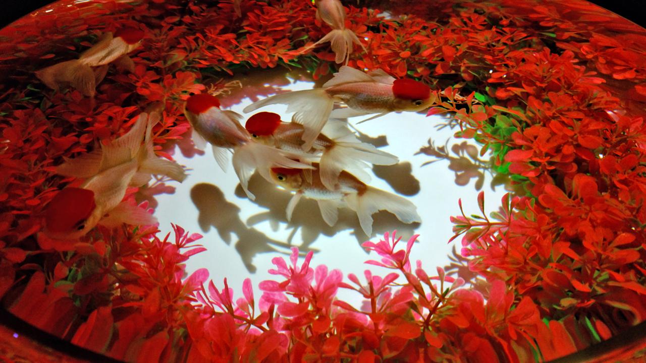 【熊本城ホール】アートアクアリウム城~熊本・金魚の興~&ナイトアクアリウム